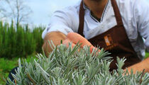 Шеф-повар Илья Кокотовский о стажировках в «Noma» и «Mugaritz» и новом гастрономическом сете в «Molto Buono»