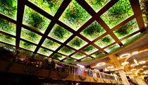 Ресторан Vegaнутые и кофейня ABC COFFEE ROASTERS на Центральном рынке на Трубной