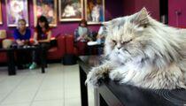 1 марта —  праздник в котокафе «Республика кошек»