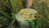Новинка в PITA'S! Матча тирамису – новый взгляд на классический десерт