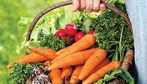 Овощной уикенд в «Марселе»