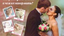 Попробуй свадьбу на вкус в «Русском подворье»