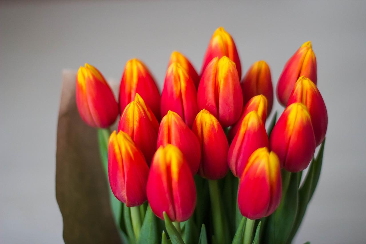 8 марта тюльпаны и поздравления